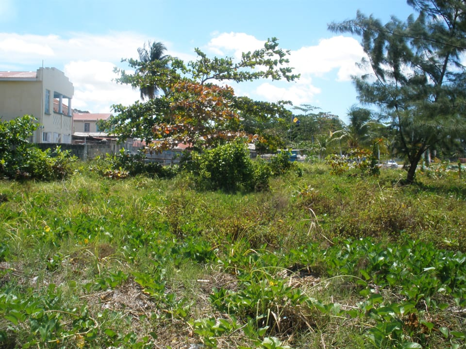 Vegetation on the western side of lot