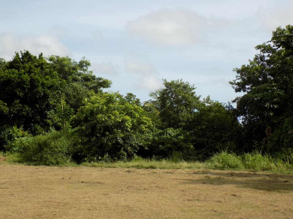 Flat Land Near Main Road