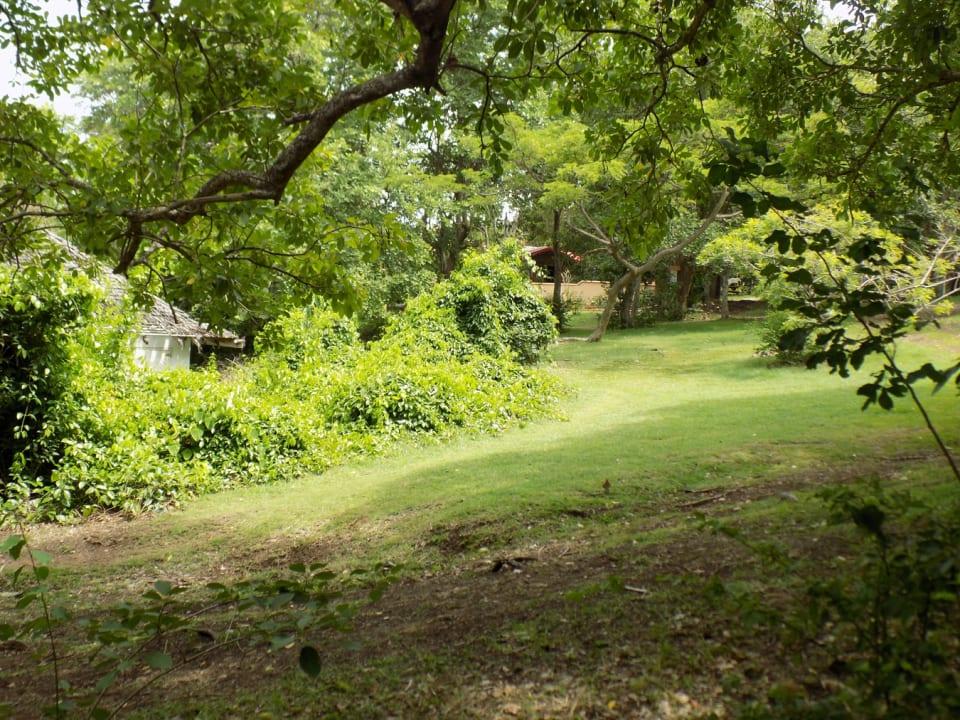 Land around Cottage