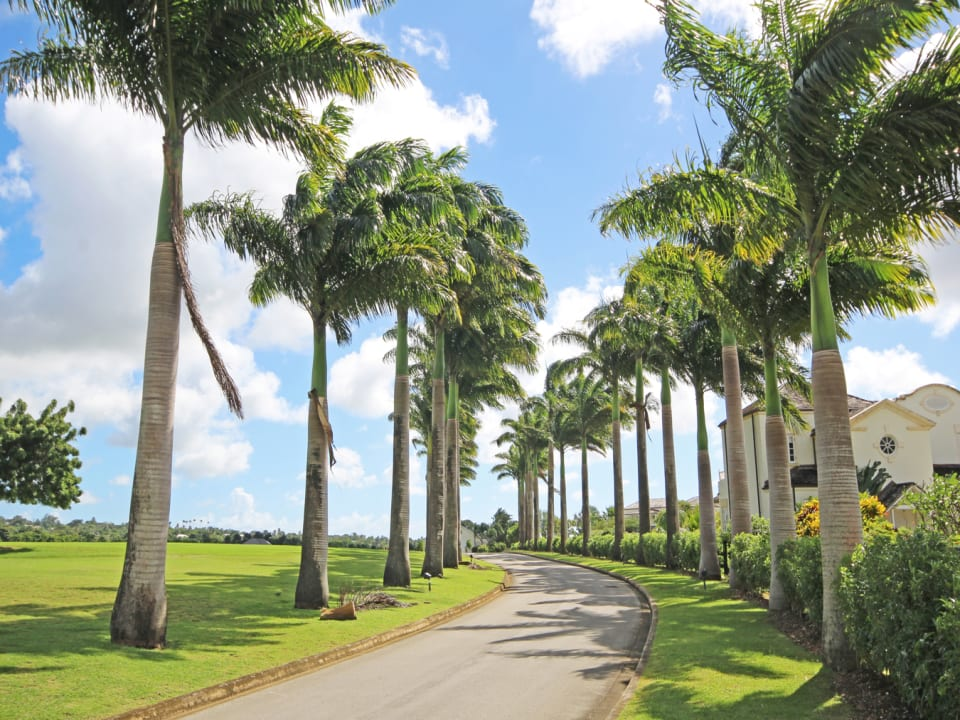 The entrance to the development, a Royal Palm tree lined driveway