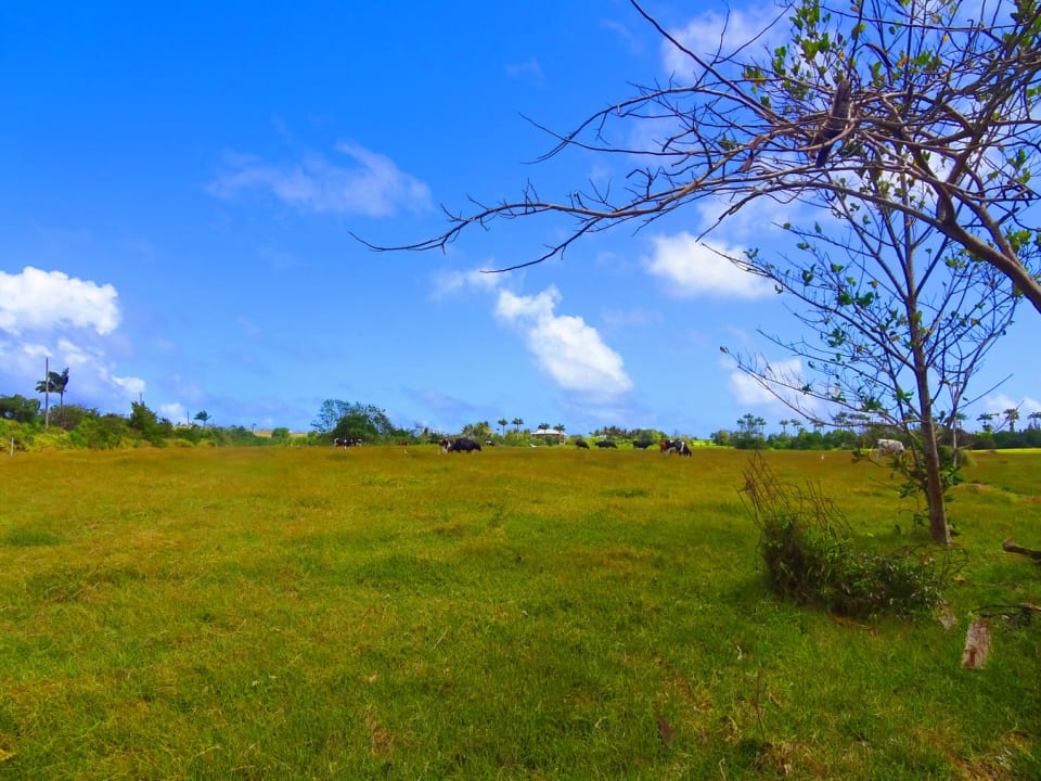 Open land situated just north of the available lot