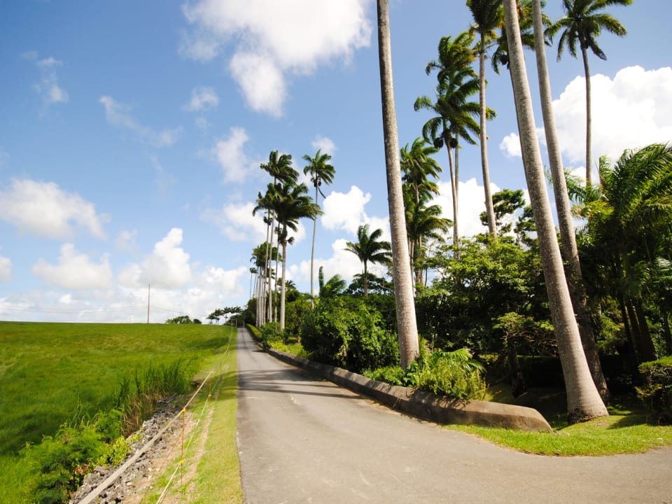 Private road through the lands and fields