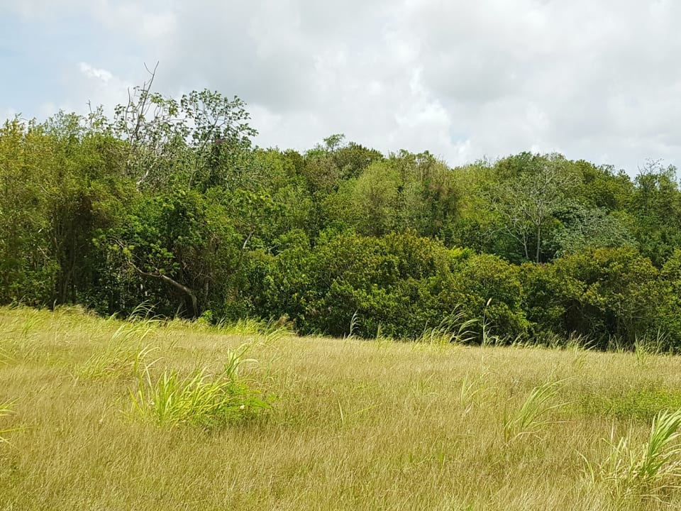 Littland lot overlooking lot 4