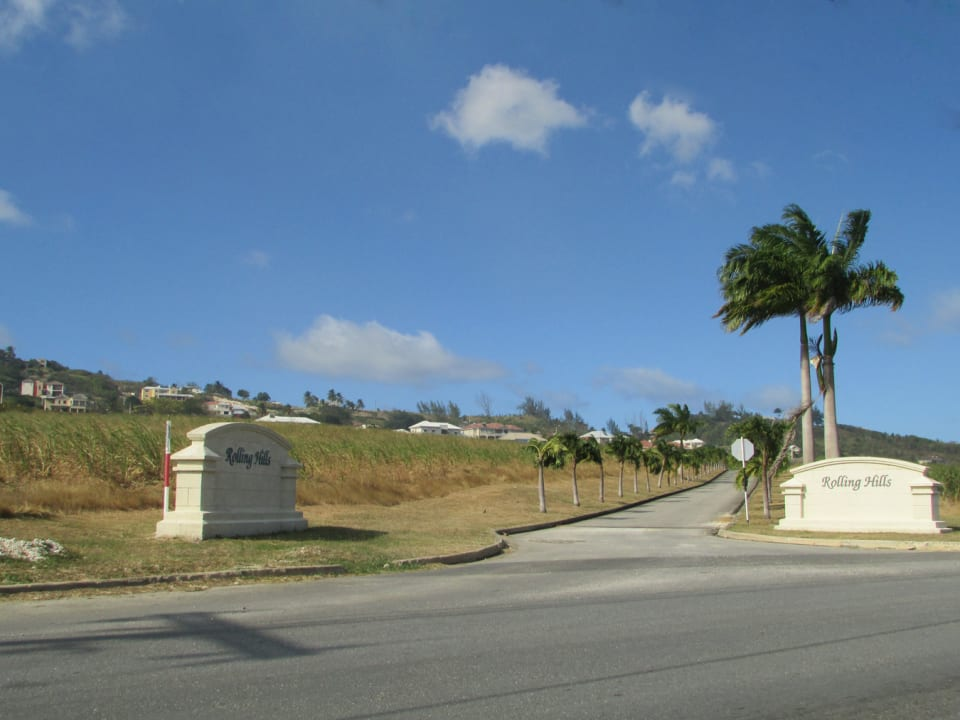 Palm lined entrance to Rolling HIlls