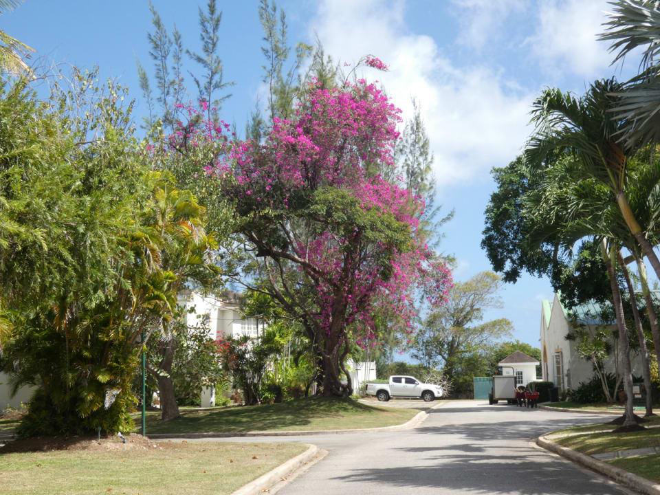 Mature Tropial Grounds