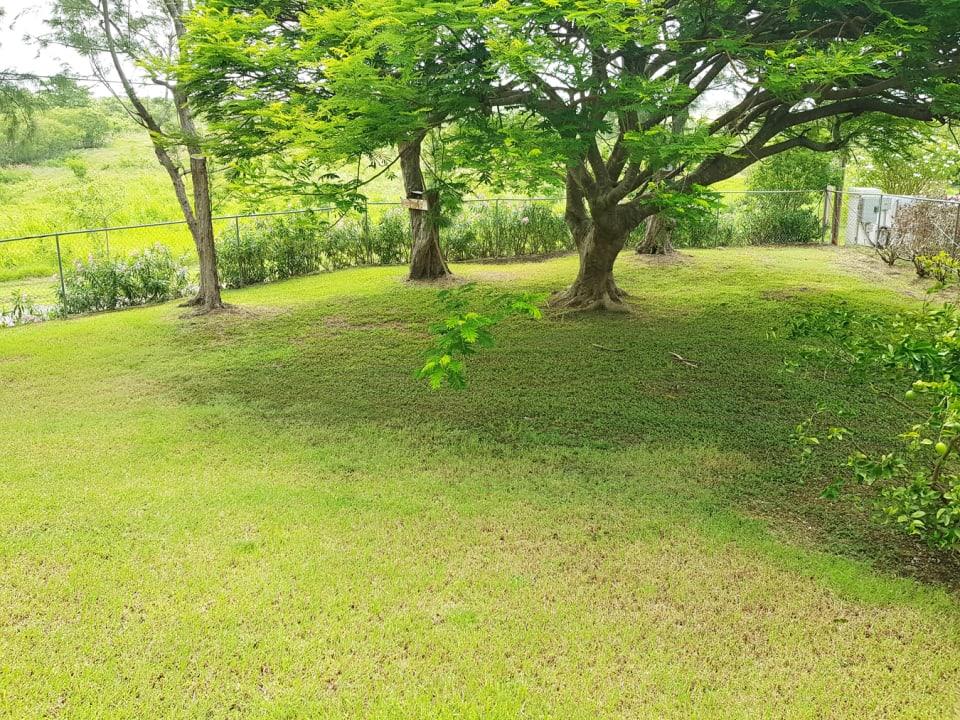Shared front Garden