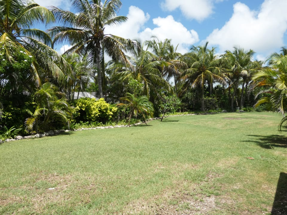 Lawns and Palms