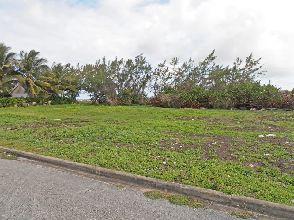 The Lot is bordered by Tropical Trees on one side