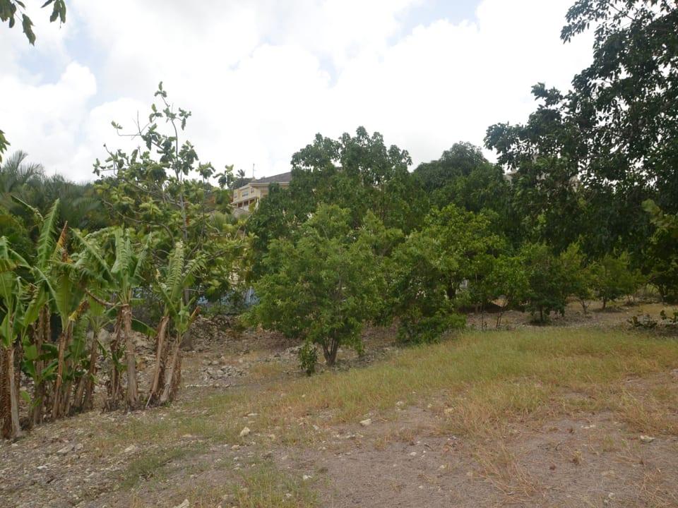 Numerous Fruit Trees