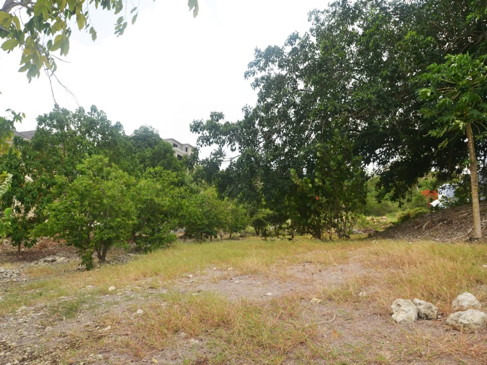 View of some of the Fruit trees