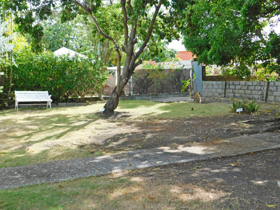 Shaded garden with fruit trees