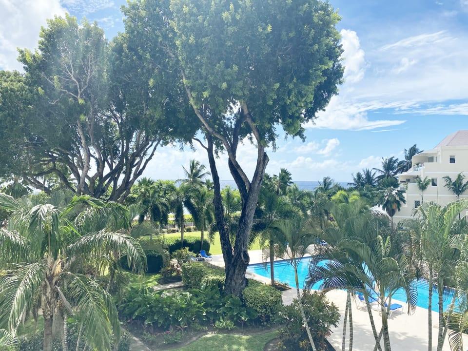 Views from Palm Beach 305