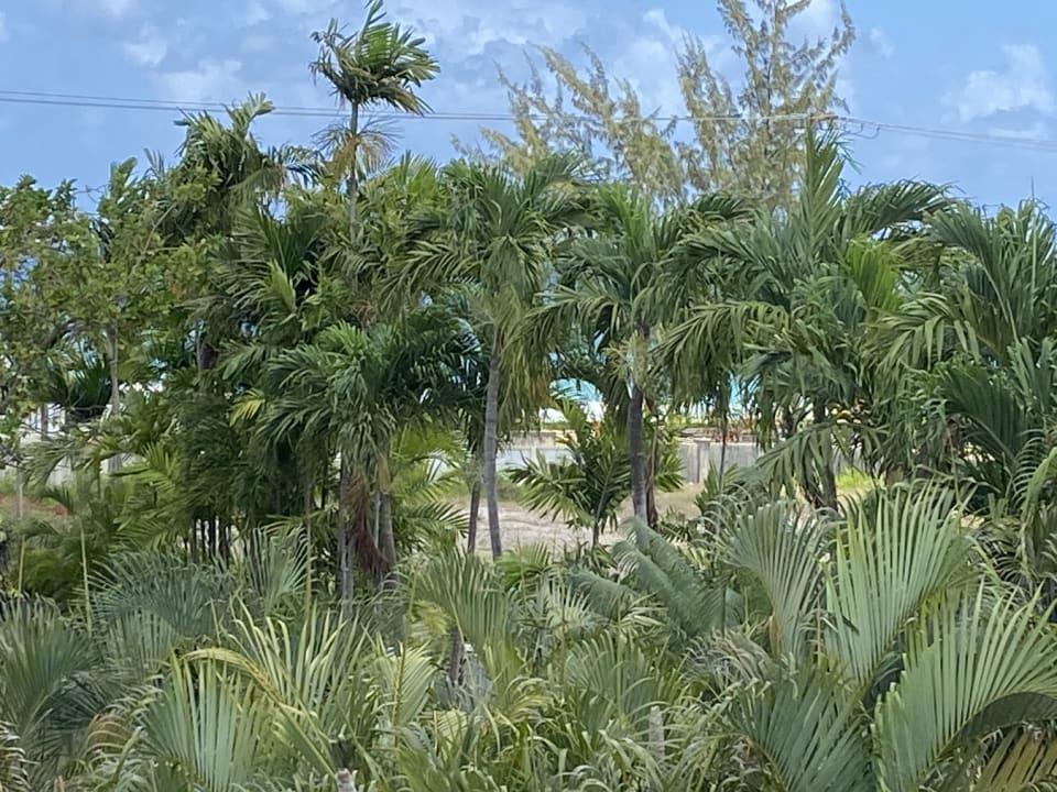 Partial Sea Views