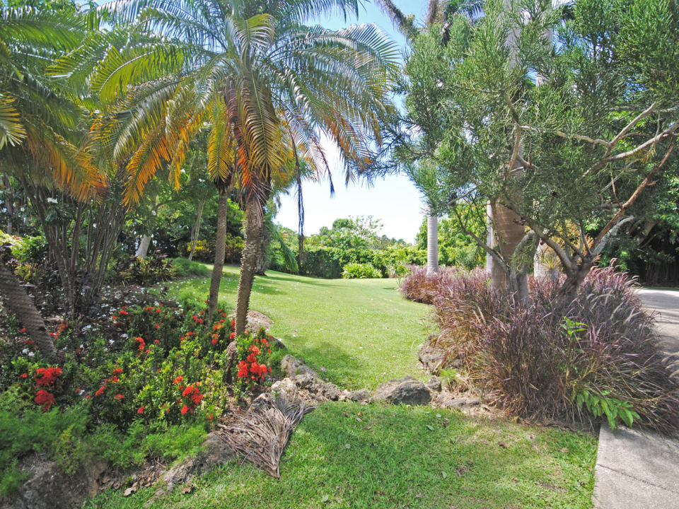 Vast gardens of Pandanus