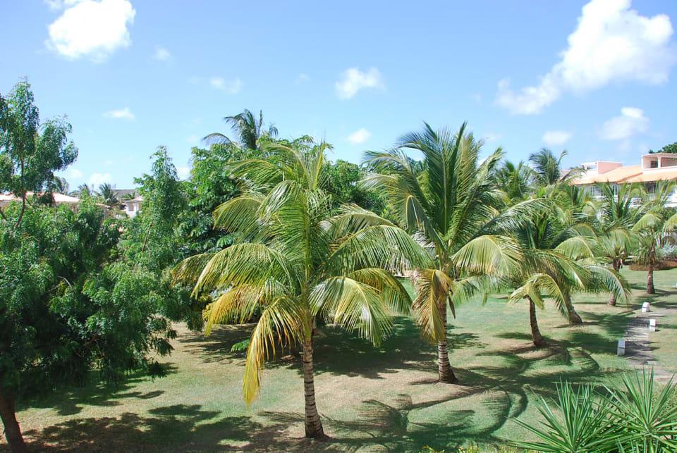 Green views