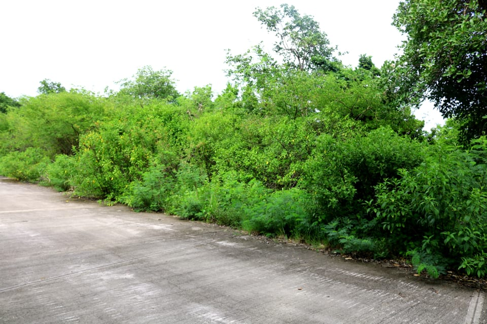 Land on right of access road
