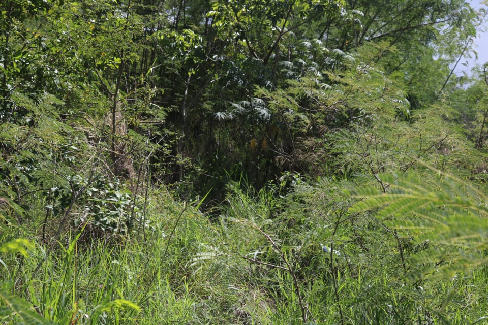 Grass and other shrubs on lot