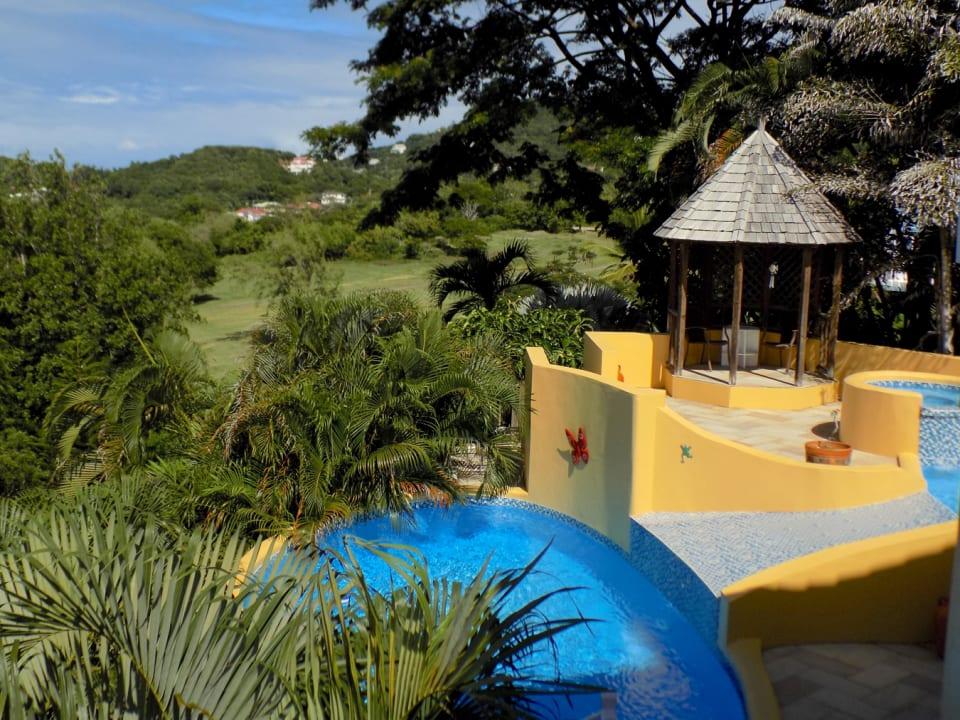 Pool & Deck with lush foliage backdrop