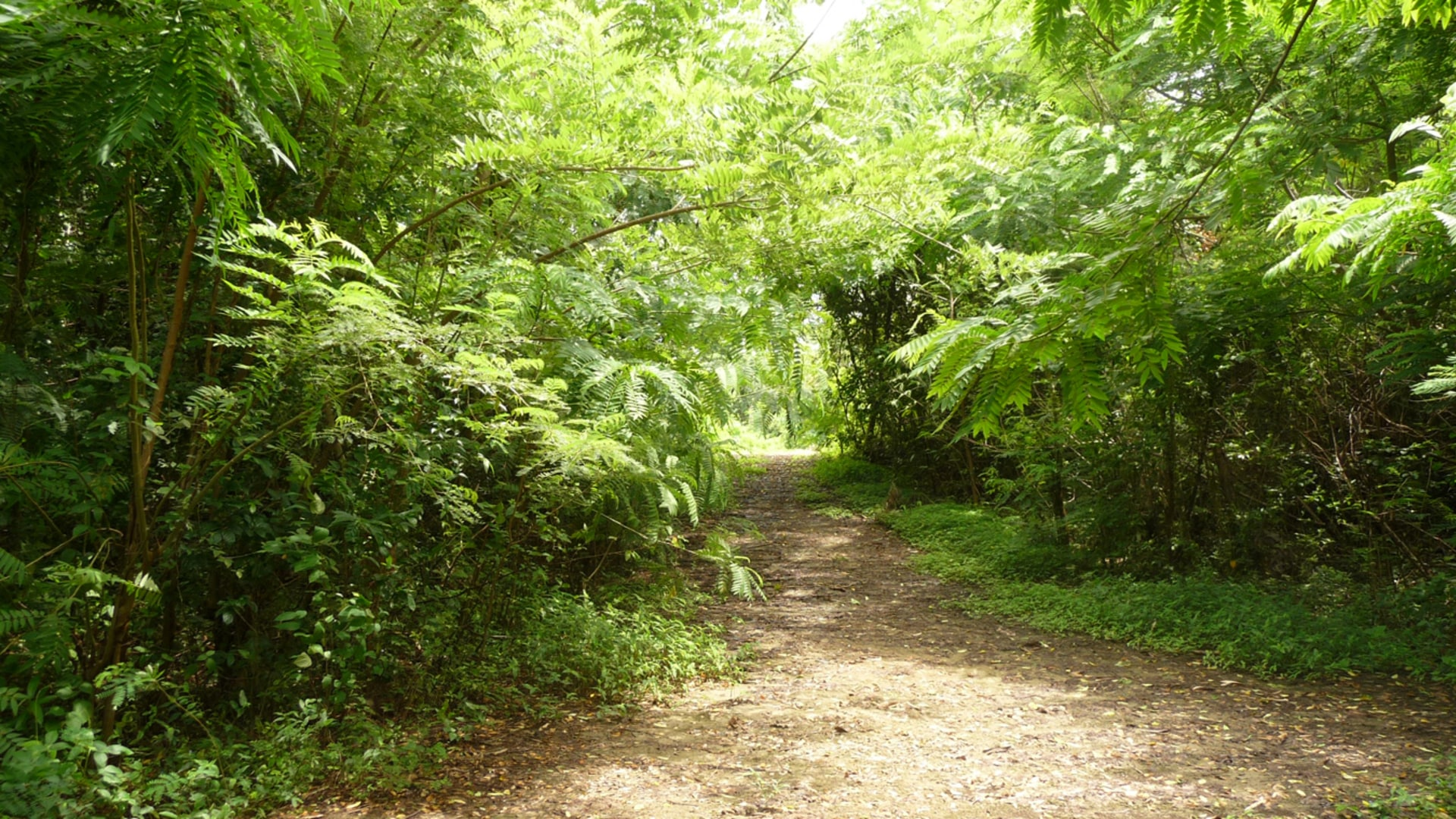 EBs Forest - Land - Property for Sale in Grenada - Terra Caribbean