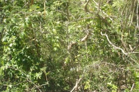 View overgrown bush on adjacent Lot 2A