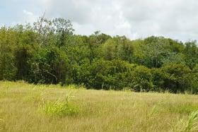 Littleland Lot overlooking lot 4