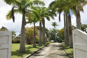 Palm Driveway