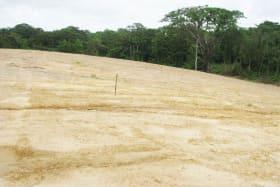 Guaico Tamana Road, Phase 1