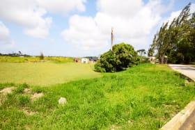 Cliff Plantation