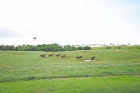 Horses in one of the paddocks