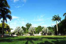 Large lot with mature Royal Palm trees