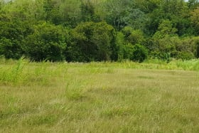 A view over part of Littland lot 3