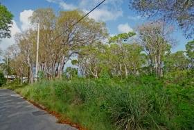 View of the lot facing westward