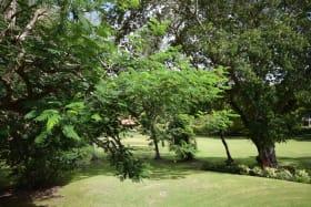 Surrounding gardens
