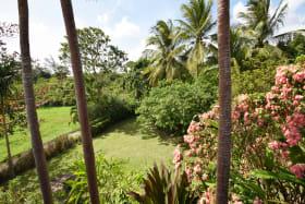 Mature Barbados Gardens
