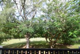 Peaceful garden views