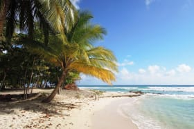 Gorgeous beach with shade and good swimming