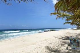 Beach Bars & Reataurants