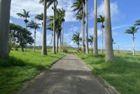 North, Palm Lined Entrance