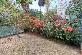 Bougainvillea in the Back Garden
