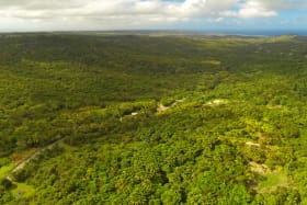 72 acres of Lush Vegetation