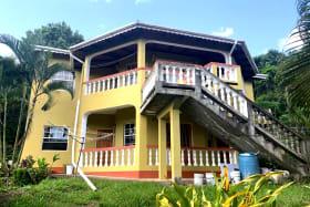 Yellow Palm House
