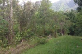 Rincon West