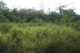View of overgrown lot looking east