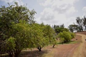 Acreage with Established Orchards