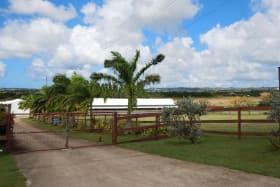 The Horse Farm