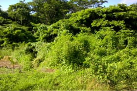 Ever Green Lot No 1