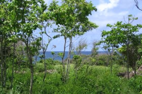 Karib Beach Lot 15