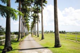 Royal Palm lined driveway