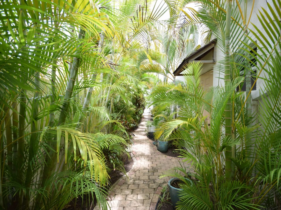 Lush pathway leading from the entrance