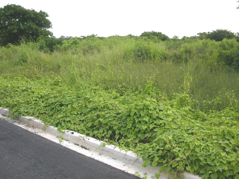 lot and road